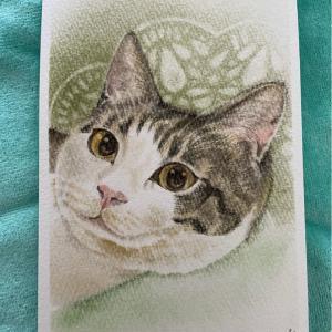 猫行脚26「幸太郎ちゃん」