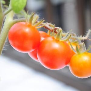 初夏~梅雨の初収穫