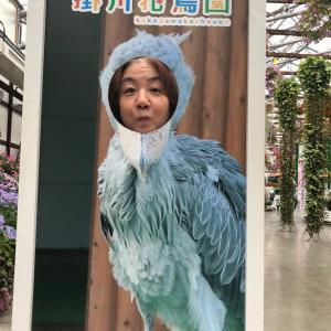 掛川花鳥園は噂通り最高だった②