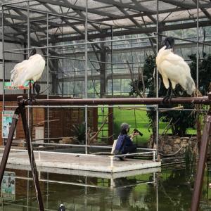 12時間チャレンジ⑩掛川花鳥園の話がまだあるのよ