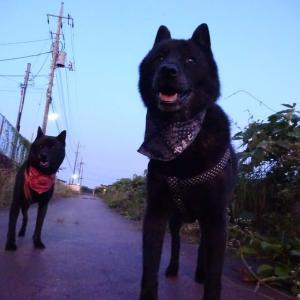 早朝ワン散歩