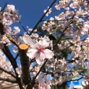 早咲きの不安の話