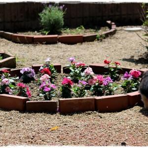 自作花壇 その後。