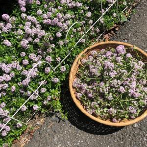 庭にハーブを植えると健康になる?かもね。