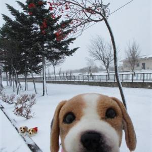 雪まっしろ