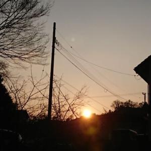 久しぶりの太陽