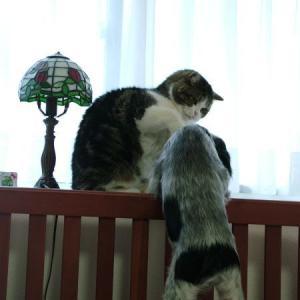 猫パンチされるルーニー