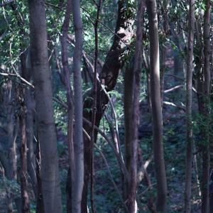 日本の森林の木。