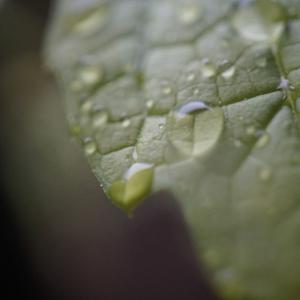 雨の日こそ、カメラを持ってお散歩♪