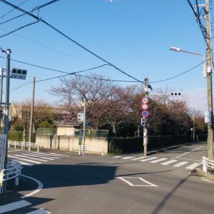 歩車分離式信号