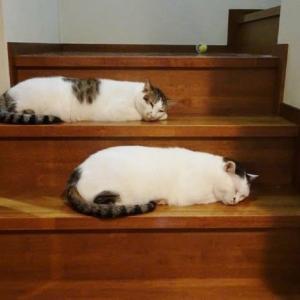シンクロしてる猫