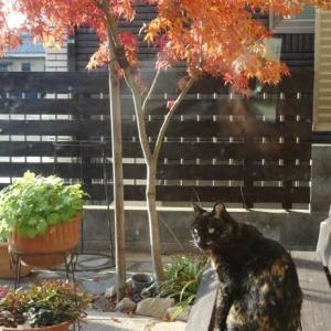 紅葉と野良猫さん
