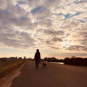 夕方わんこ散歩・雲が・・・