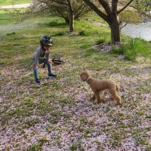 花絨毯と少年と犬