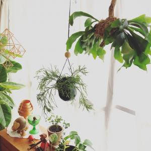 植物のある暮らしと手作り鯛焼き