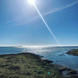 沖縄の海で自由研究の材料採取