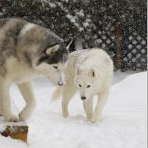 新作オススメ情報と!!冷え込んでるコト気付いているかな!?ちょっと心配な老犬のお庭散策!