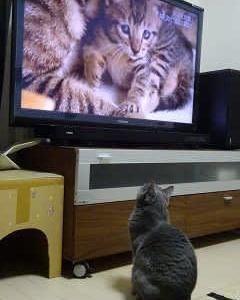 ◆テレビ大好きっ子◆