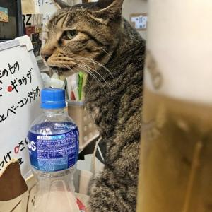 遅い時間の訪問でまったり ~9月下旬のてまり猫さんズ・前編~