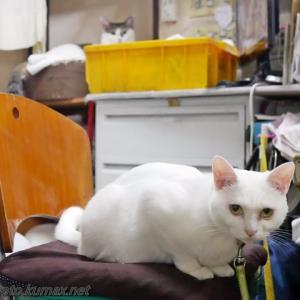 遊ぶ猫さん達 ~7月上旬の友の湯にゃんズ・後編~