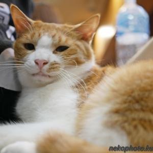 いいや、このまま寝よう ~8月最終週のてまり猫さんズ~