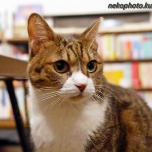買う本、決まった? ~12月下旬のCat'sMeowBooksさん・後編~