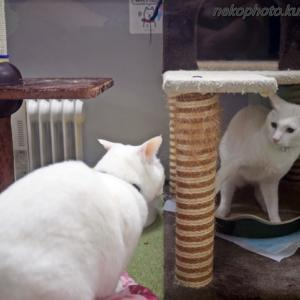 遊び始めた若猫さん ~5月上旬の友の湯にゃんズ・完結編~