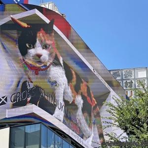 新宿東口の猫