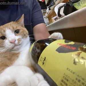 あ…やっぱり… ~6月下旬のてまり猫さんズ・後編~