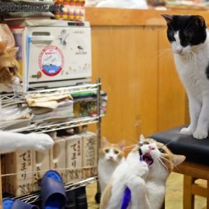 ミンチョさんも参戦 ~7月のてまり猫さんズ・その4~