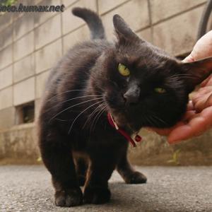 暇なら撫でて! ~とある路地の黒猫さん・前編~