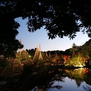 「白鳥庭園」のライトアップ