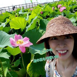 【角度によって色んな表情を魅せる蓮の花】