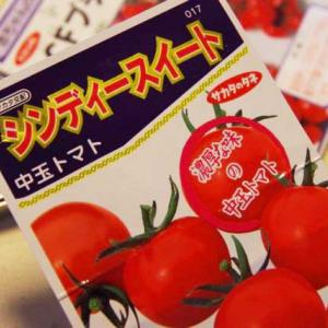 バカと呼ばれても構わない。トマトの種を播きました。