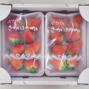 ふるさと納税:熊本県宇城市 新鮮朝摘みいちご「さがほのか」250g×6P