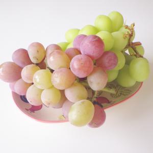最高です☺︎茄子のマリネ、珍しい品種の梨、ぶどう食べ比べで衝撃の事実判明
