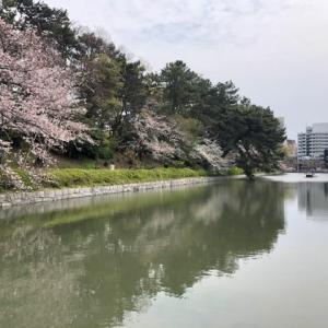 桜&オンラインレッスン準備