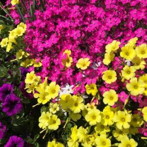 ちょこっとお花見ドライブ&ちょこっとお散歩