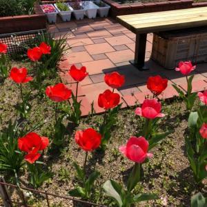 咲いた咲いた(゚∀゚) 「よく手入れされた庭」は英語で