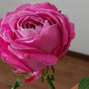 薔薇の花 と オリエント急行