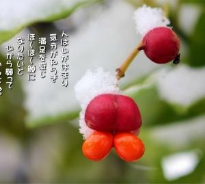 No.700 柾の実 ( 花言葉:円満)