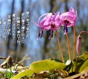 No.704 片栗 ( 花言葉:初恋・情熱・寂しさに耐える )