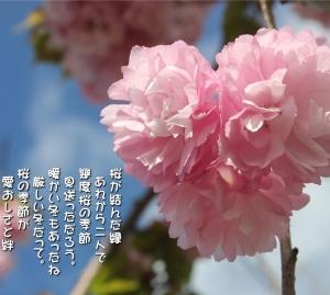 No.705 ハート桜 ( 花言葉:神聖 )