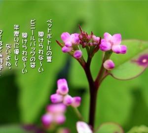No.745 蔓紫 ( 花言葉:頼りにします・頼り過ぎ )