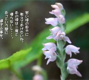 No.750 深山鶉 ( 花言葉:―  )