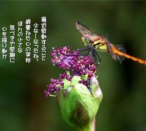 No.771 野竹 ( 花言葉:静かな情熱 )