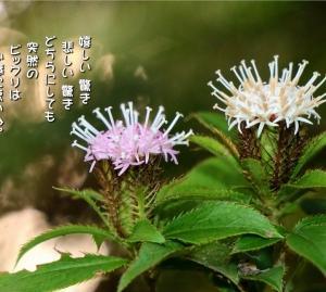 No.770 オケラ ( 花言葉:驚かさないで )