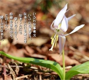 No.726 白花片栗 (花言葉:本当の姿を見て・私は特別)