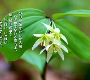 No.730 稚児百合 ( 花言葉:恥ずかしがりや )
