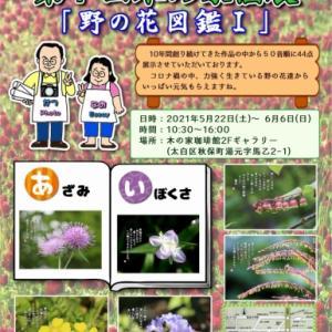 なおかつフォトエッセイ第7回木の家個展『野の花図鑑Ⅰ』を開催します。